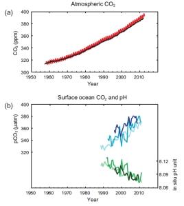 Incremento en la concentración promedio de CO2 en la atmósfera y acidificación del océano